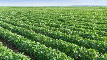 Campo difícil. El negocio agropecuario cerró un año difícil, aunque con resultados diferenciados según la actividad. El sector agrícola, pendiente del clima.