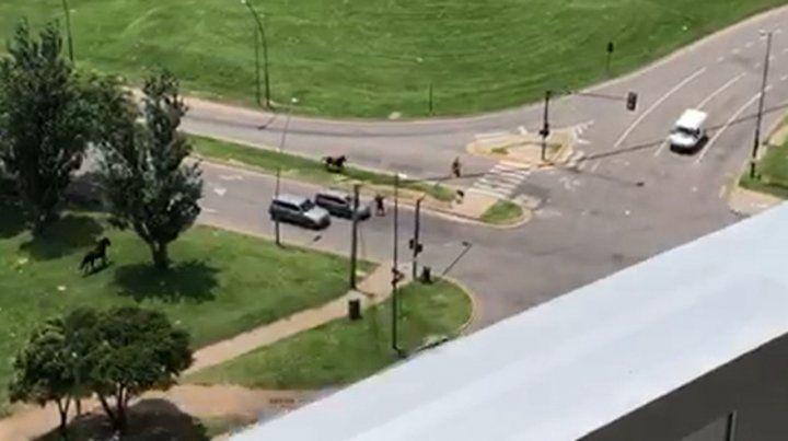 Un caballo fuera de control alarmó a los vecinos de Puerto Norte