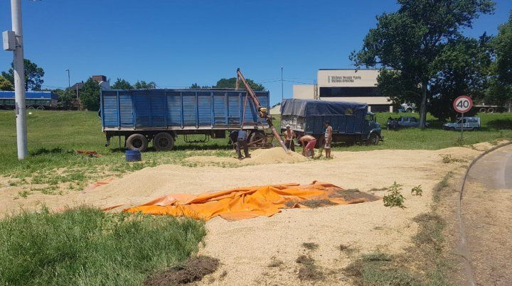 Un acoplado volcó y desparramó un gran cargamento de soja en la subida de la autopista a Santa Fe