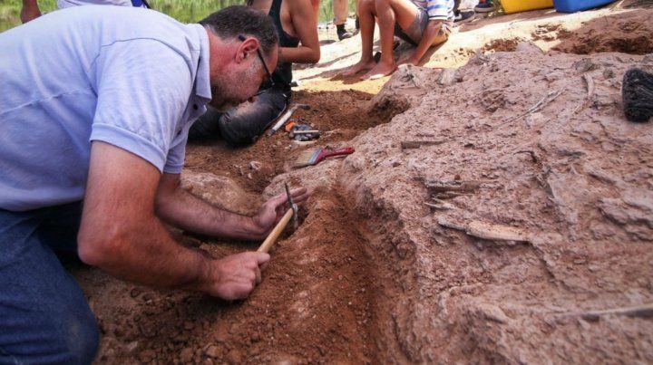 Hallazgo paleontológico de mamífero placentario cerca de Mattievich