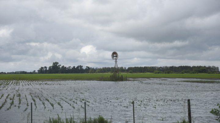 Desastre. Más de 300 mil hectáreas fueron afectadas en el Norte de la provincia.