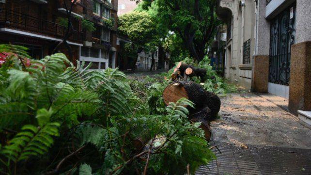 Calles anegadas y árboles caídos por la tormenta