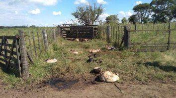 En cada robo se suelen faenar en el mismo campo unos 10 animales, lo cual genera unos 100 mil pesos de pérdida por productor.