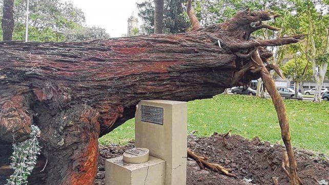 Histórico. El eucalipto que plantó Jorge Luis Borges en 1969 fue arrancado de cuajo
