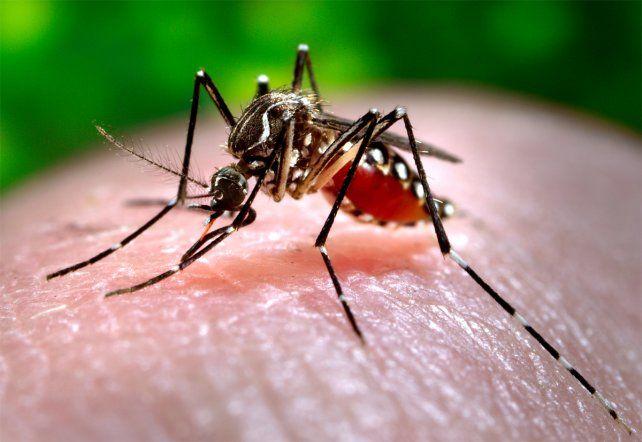Confirmaron 11 casos de dengue en la ciudad de Santa Fe
