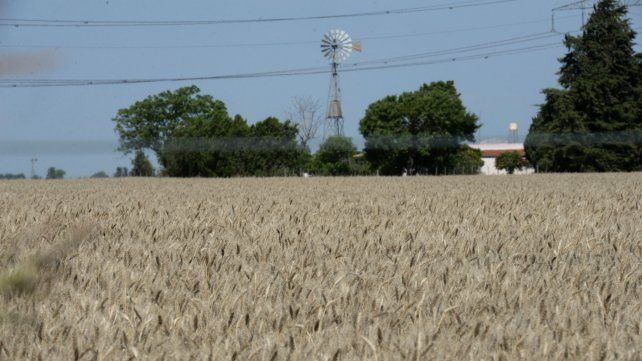 El trigo dio la nota en la provincia de Santa Fe.