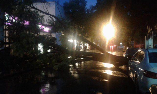 Calles anegadas y árboles caídos tras la fuerte tormenta