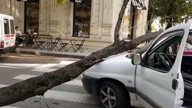 Doblaba en pleno centro y se le cayó un árbol en el parabrisas