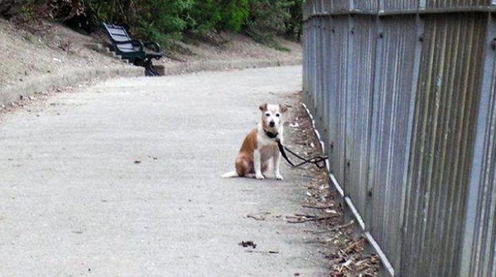 El verano es para muchos una oportunidad para abandonar sus mascotas