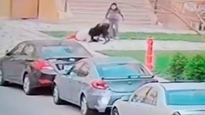 Una mujer protege a un chico del ataque de dos perros con su propio cuerpo