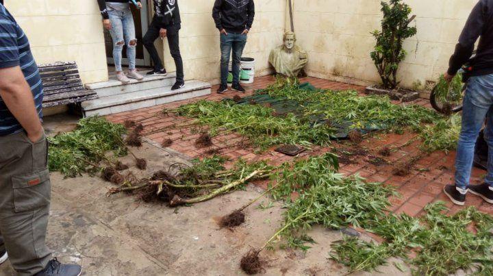 Las plantas estaban en el patio de una casa en zona oeste.