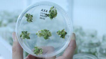 Ciencia. La biotecnología es una de las áreas a promover con la legislación.