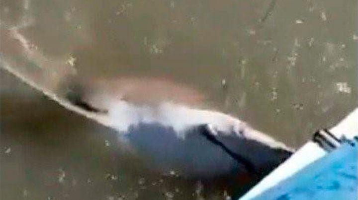 Atrapan a un tiburón, lo matan a tiros y se filman