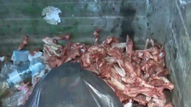 Hallan alrededor de 30 esqueletos y cráneos de perros faenados en un contenedor