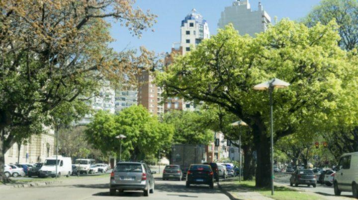 verde. El objetivo es llegar a 2030 con un millón de árboles.
