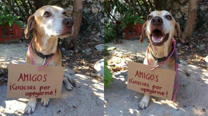 Un perro vendió postre para pagar su tratamiento contra el cáncer