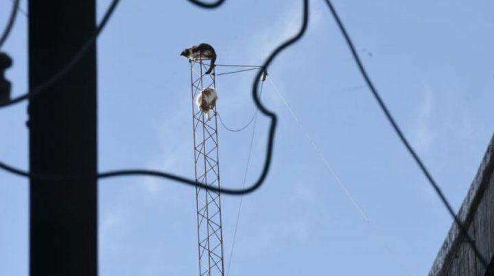 Rescatan a dos gatos que treparon a una antena y no pudieron bajar