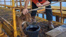 Rescataron a un perro que nadaba a 220 kilómetros de la costa