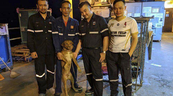 Rescataron a un pequeño perro que nadaba a 220 kilómetros de la costa
