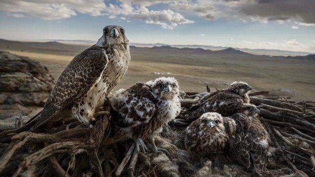 Por el día de la tierra, las mejores fotos de naturaleza elegidas por la World Press