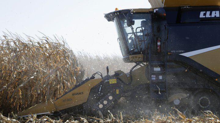 Se abre una oportunidad para la suba del precio de la soja y del maíz