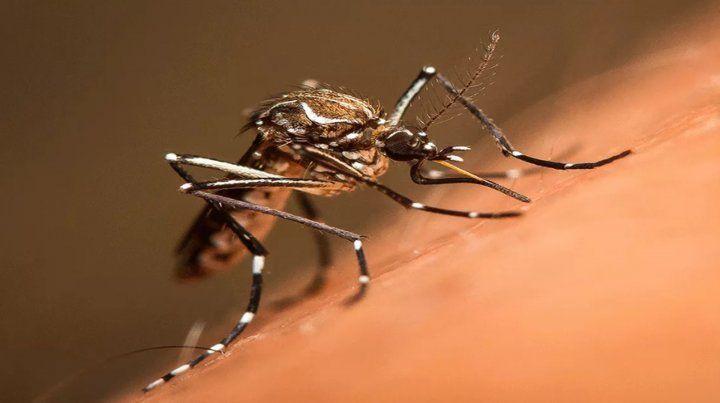 Prevén el avance de otros dos virus que transmite el mosquito Aedes aegypti
