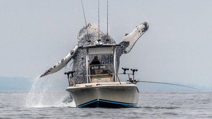 Una ballena gigante sorprendió a pescadores en California