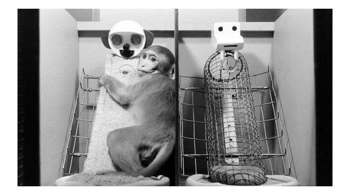 Como monos de felpa