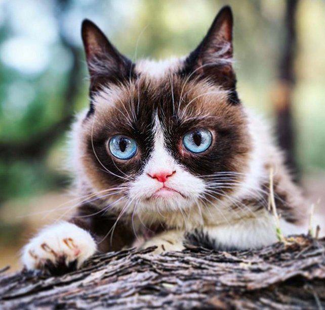 Murió Grumpy Cat, la gata más famosa del mundo