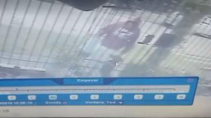 El ladrón se apodera del animal tras pasarlo entre las rejas.