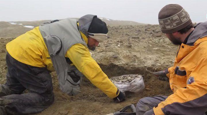 Hallan en la Antártida restos de un reptil marino similar al monstruo del Lago Ness