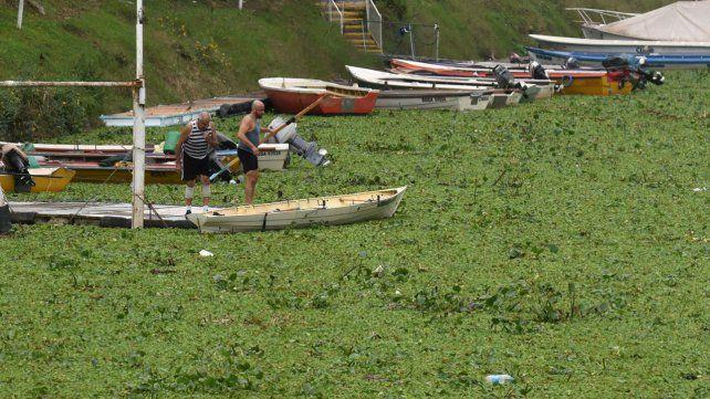 Los camalotes transformaron el arroyo Ludueña en una gran alfombra verde
