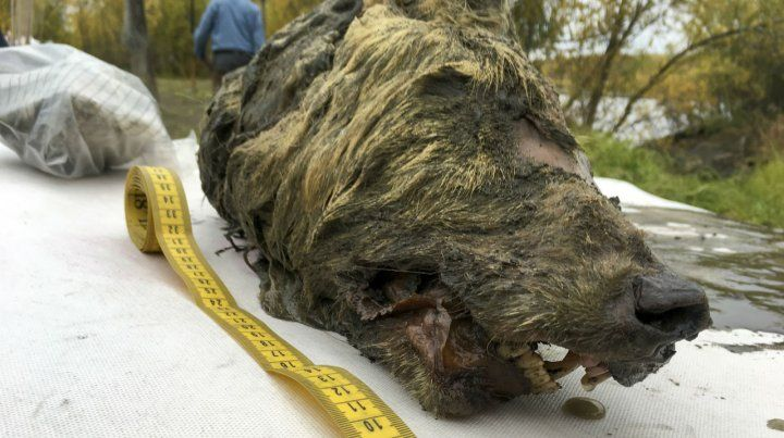 Monstruo. El animal tenía enormes dimensiones.