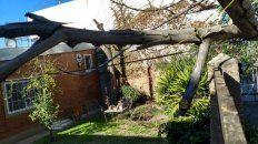 Al caer, el árbol arrastró el cableado de energía.