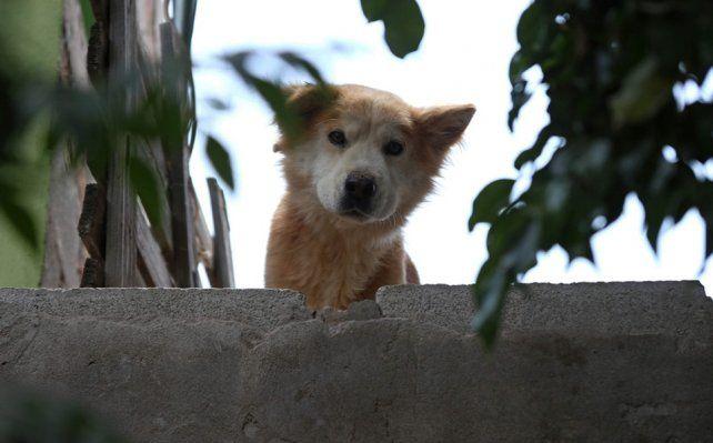 Rescataron a un perro que había sido abandonado sin agua y comida hace 20 días