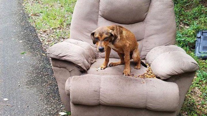 Un perro que fue abandonado por sus dueños esperó su regreso durante días en un sillón
