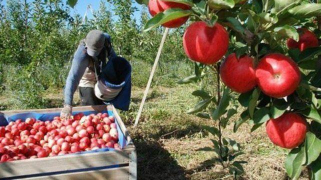 Manzanas. El sector de fruticultura salió beneficiada con la medida oficial.