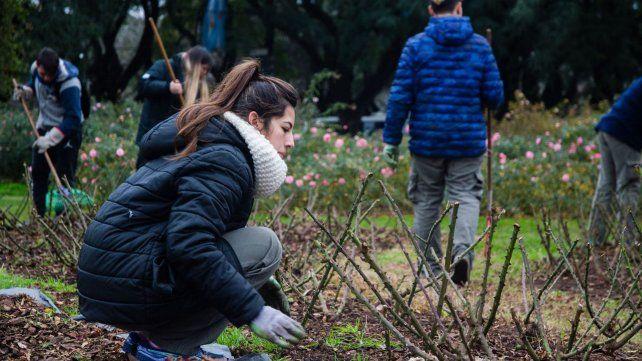 Los rosarinos podrán plantar tallos de El Rosedal en sus casas.