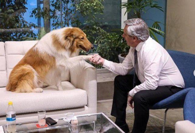 El furor por el perro de Alberto Fernández generaría consecuencias