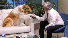 el furor por el perro de alberto fernandez trearia consecuencias