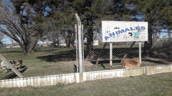 A la espera. La canilera de Chabás tiene en estos momentos unas 23 mascotas bajo su protección.