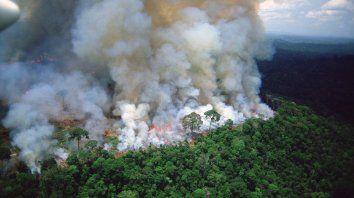 Destrucción. Las fotos de los bosques naturales ardiendo invaden las redes sociales y golpean al gobierno.