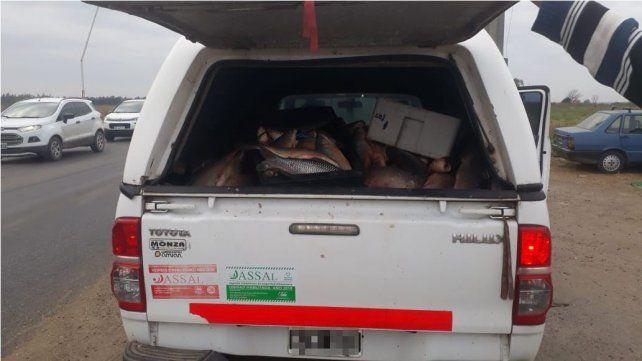 La camioneta donde era transportado el pescado en condiciones paupérrimas.
