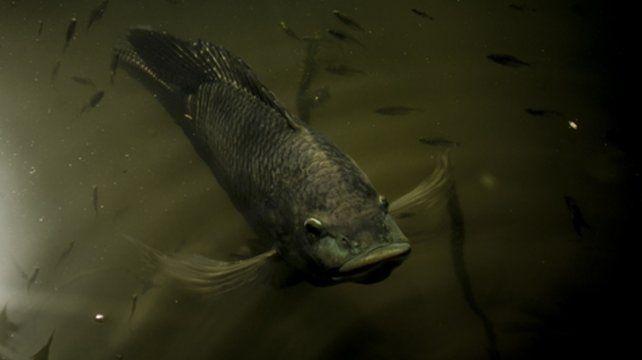 Becado. Tomará registros del Pantanal (Brasil), Esteros del Iberá (Corrientes) y Bañado de la Estrella (Formosa).