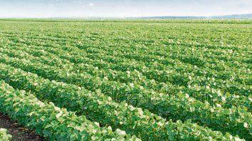 poroto. En el Mercosur predomina la siembra de soja por sobre otros cultivos y el objetivo es producir aún más.