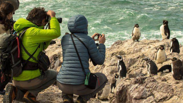 Cara a cara. Cientos de turistas llegan cada año al lugar que el penacho amarillo elige para reproducirse y anidar