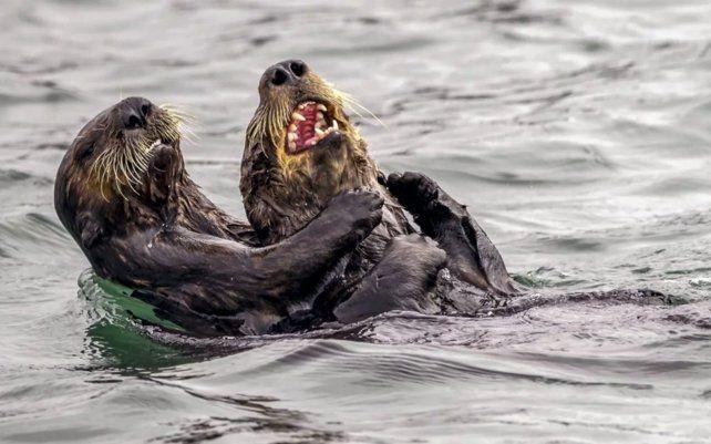 Las fotos más graciosas de vida salvaje de 2019
