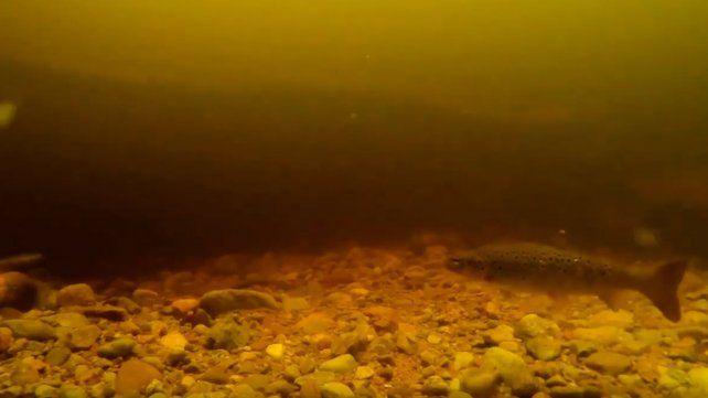 Un nuevo video alimenta la leyenda del monstruo del Lago Ness