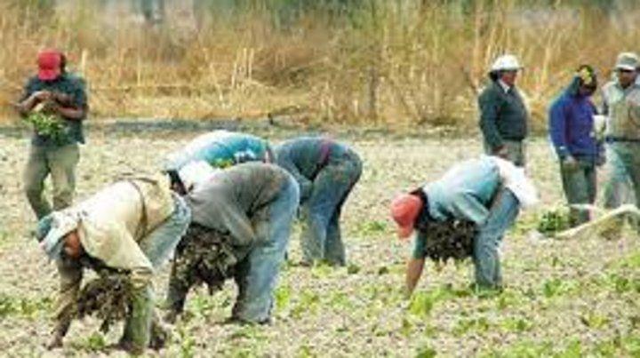Trabajadores rurales recibirán el bono de $5 mil