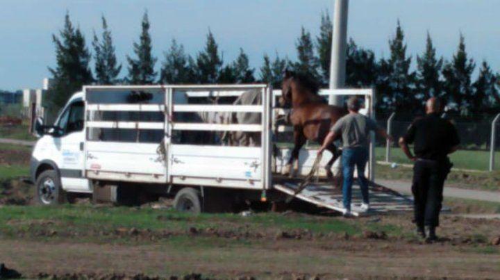 Un video reveló el salvaje maltrato a un caballo en zona oeste